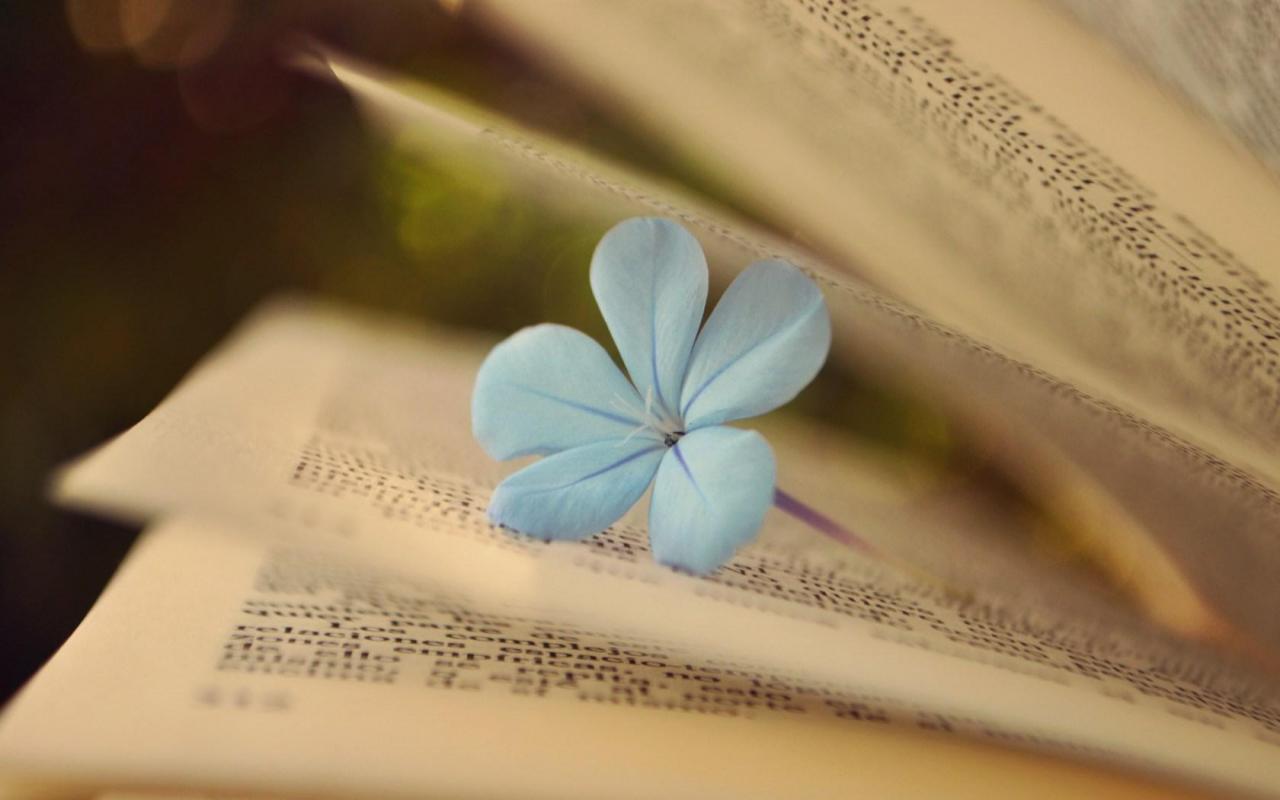 Bücher schreiben, Tipps für Autoren, Buchrezensionen